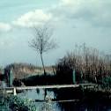 Heemtuin van dam