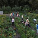 schooltuinen Oostzaan foto Tom Kisjes