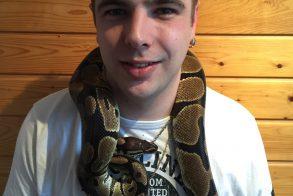 Slang python regius